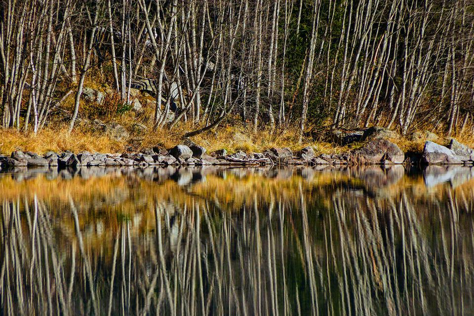 Reflection, Trees, Lake, Water, Landscape, Nature, Sky