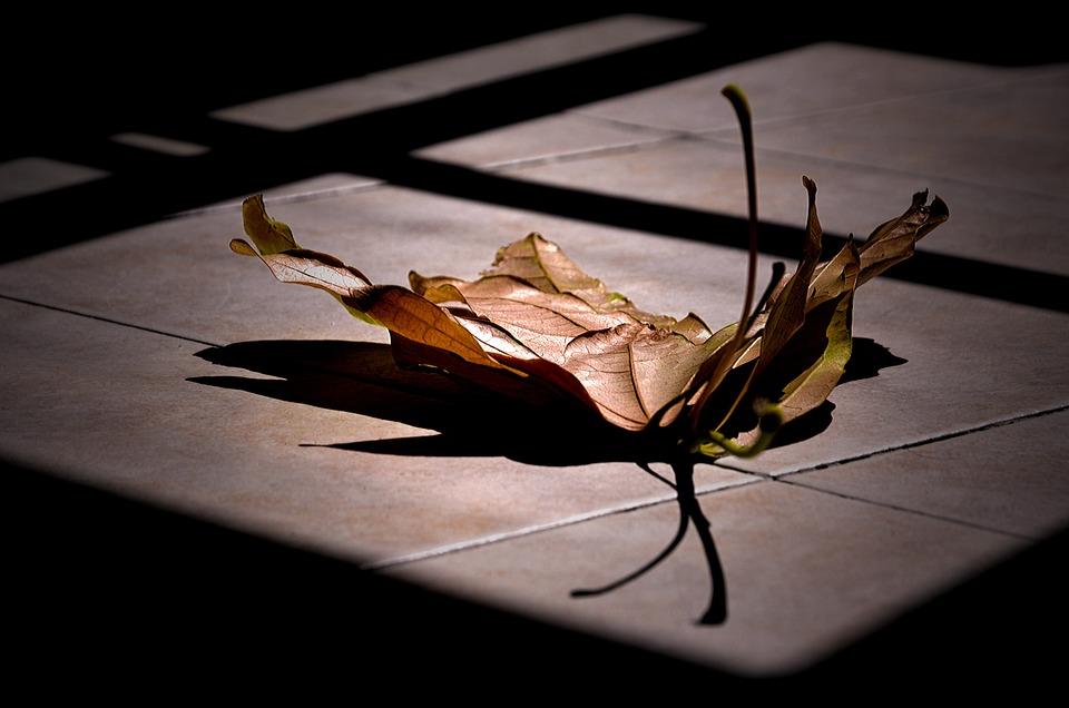 Shadow, Dark, Desktop, Reflection, Leaf, Nature, Plant