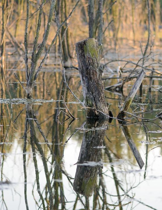 Torso, Tree, Marsh, Nature, Water, Reflection, Bark