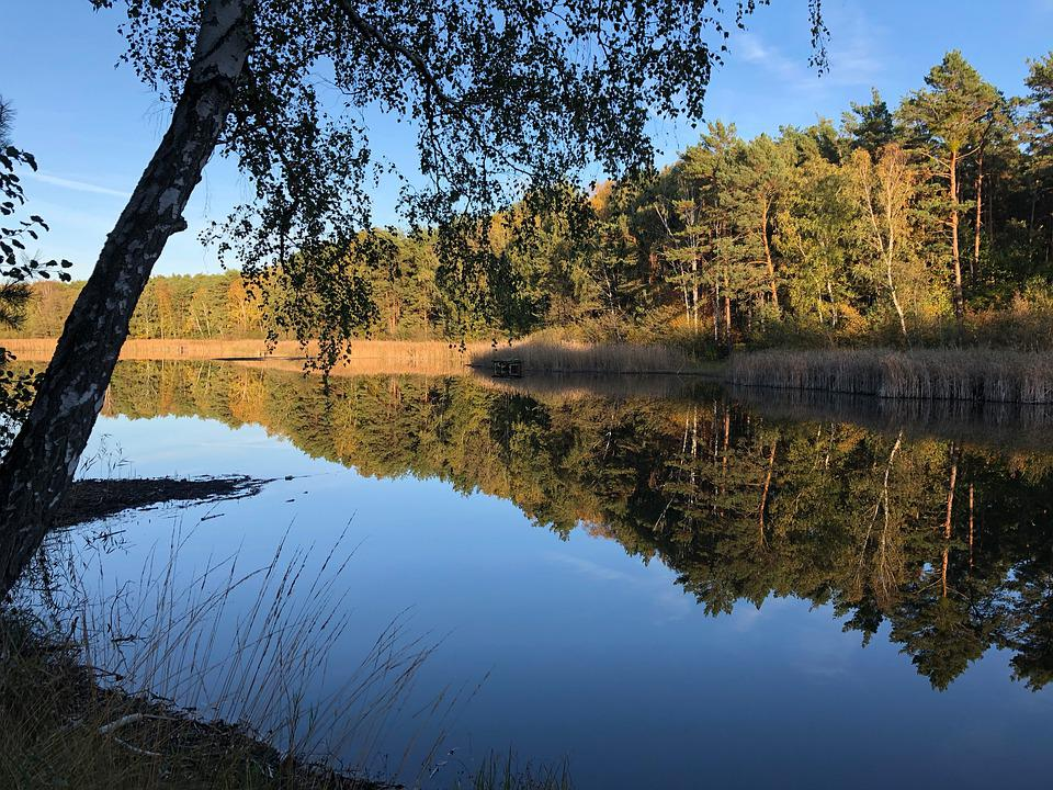 Mirror, Water, Lake, Mirroring, Reflection, Waters