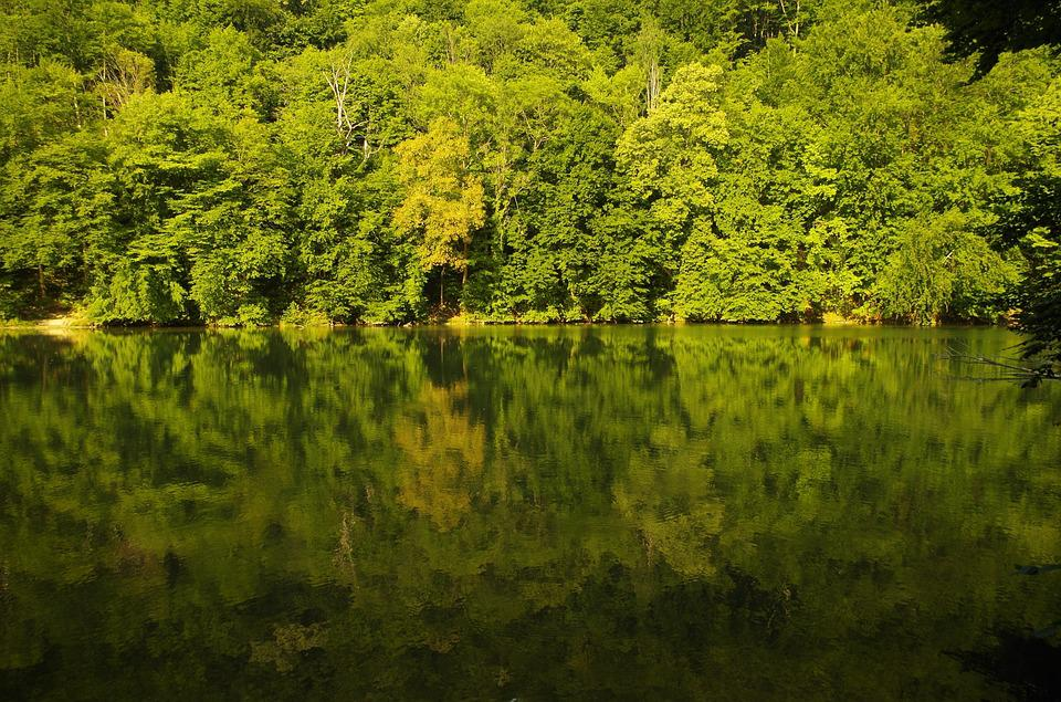 Forest, Lake, Nature, Water, Reflection, Waterfront