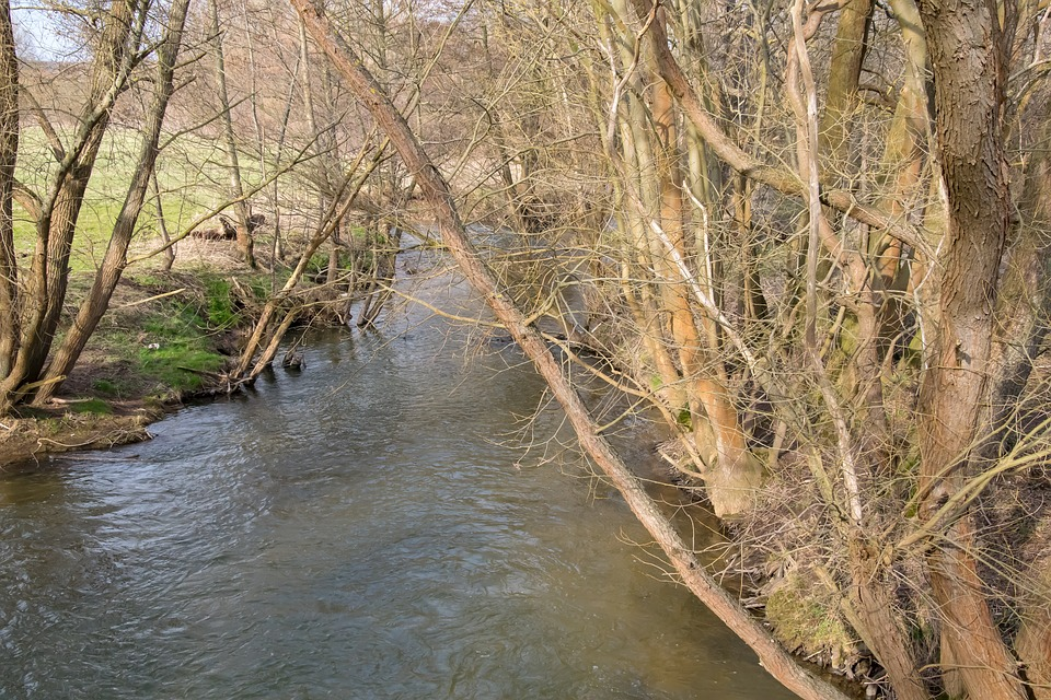 Waters, Nature, River, Tree, Wood, Reflection