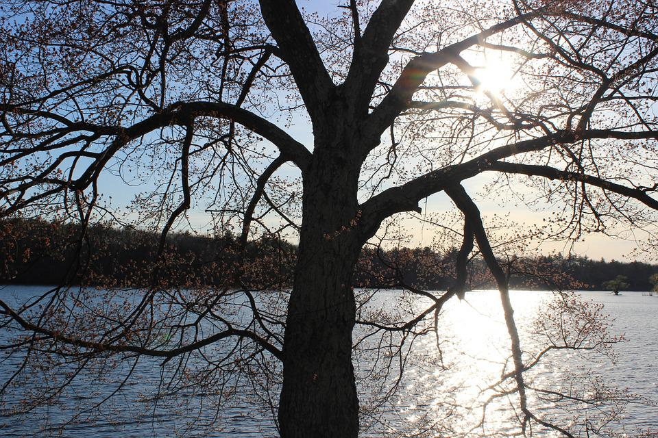 Tree, Lake, Branch, Water, Nature, Reflection, View