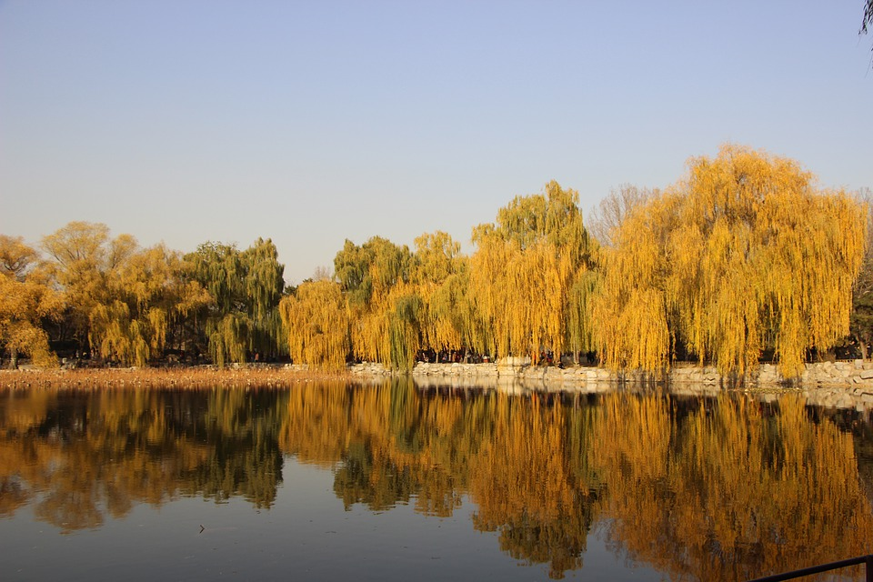 Early Winter, Pond, Tree, Reflection