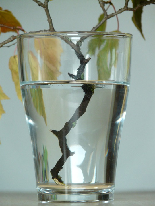 Refraction, Glass, Branch, Water, Wet, Casting
