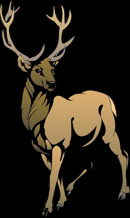 Deer, Brown, Animal, Posing, Antlers, Regal, Pose