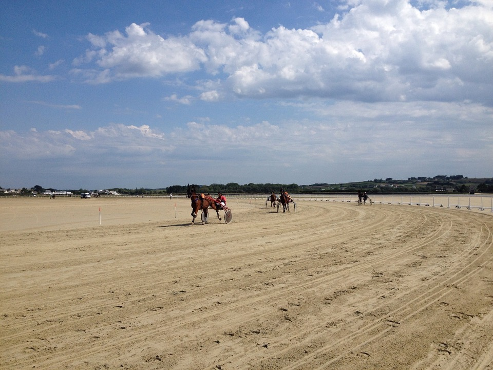 Kernic Cove Bay, Horses, Race, Regional, Local, Sandy