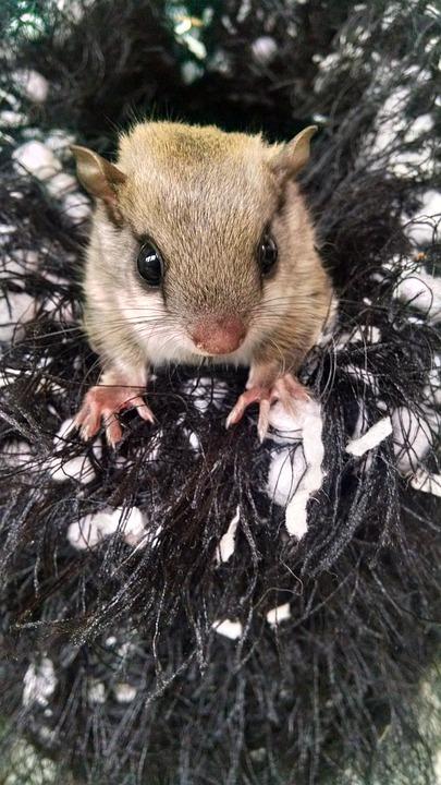 Infant, Squirrel, Orphan, Wildlife, Rehabilitation
