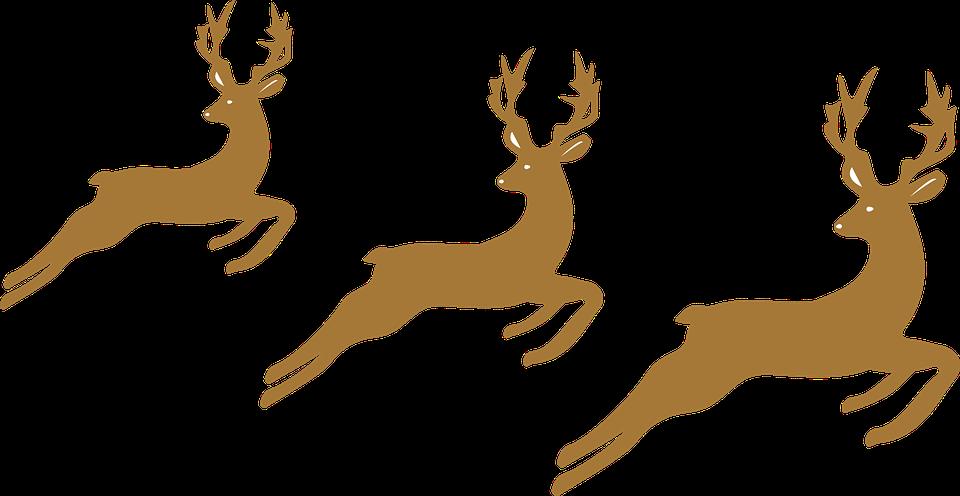Reindeer, Christmas, Horns, Happy Holidays
