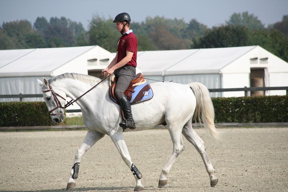 Reiter, Horse, Mold, Dressage, Square, Saddle