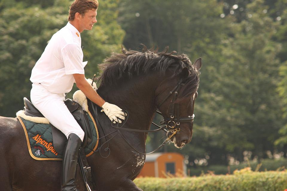Horse, Stallion, Reiter