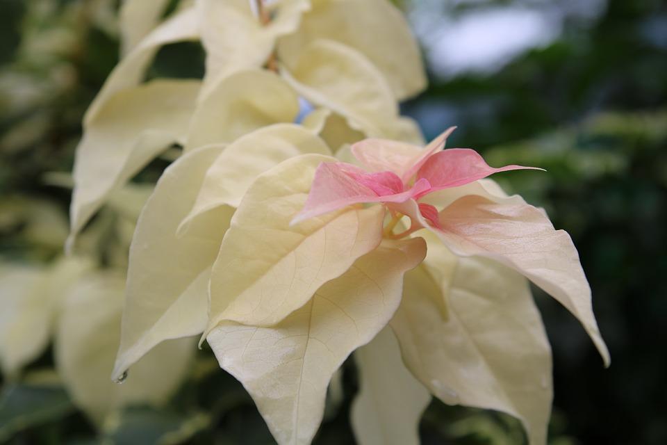 Flower, Asia, Wellness, Relax, Zen, Nature, Meditation