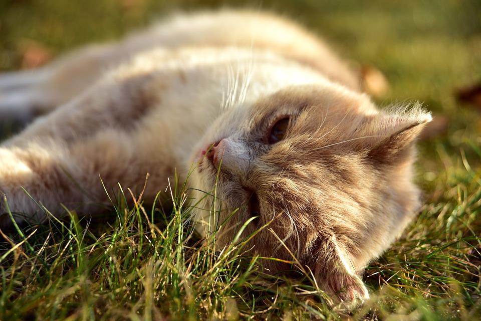 Cat, Pet, Animal, Meadow, Rest, Break, Relax, Concerns