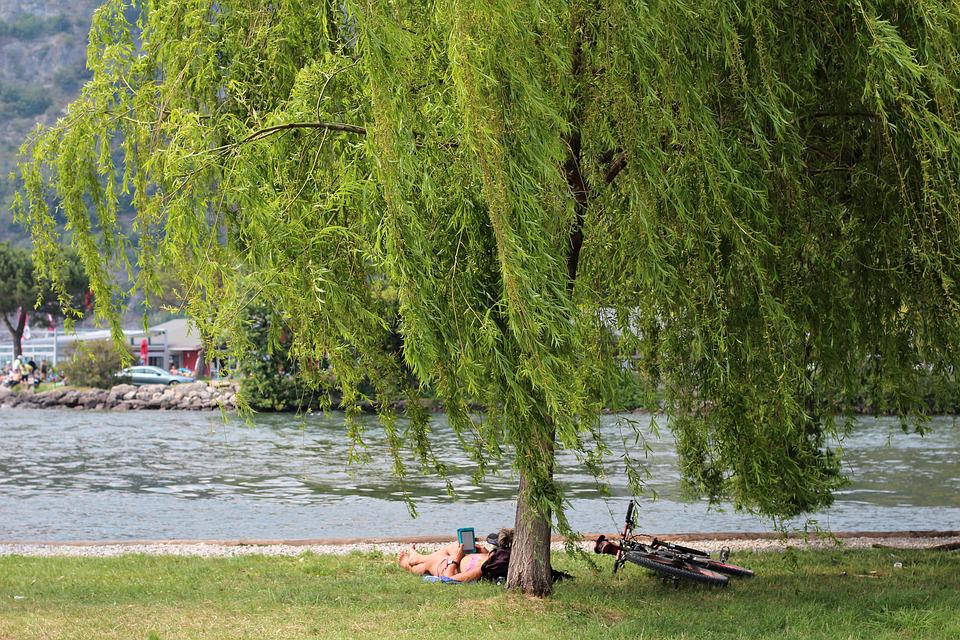 Relax, Rest, Read, Tree, Green, Water, Recovery