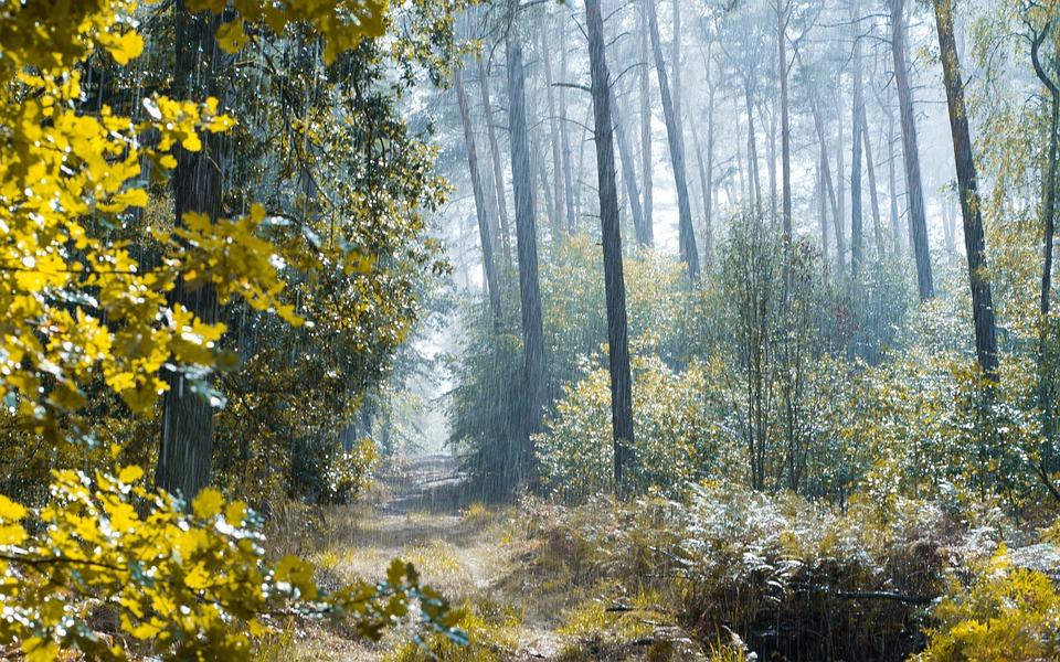 Forest, Rain, Relaxation, Nature, Dübener Heide