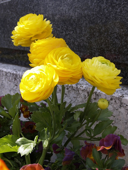 Yellow, Flower, Decoration, Cemetery, Grave, Religion