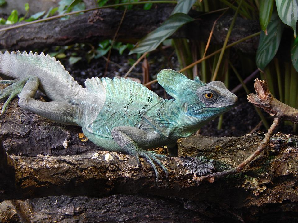 Zoo, Animal, Colors, Lizard, Reptile