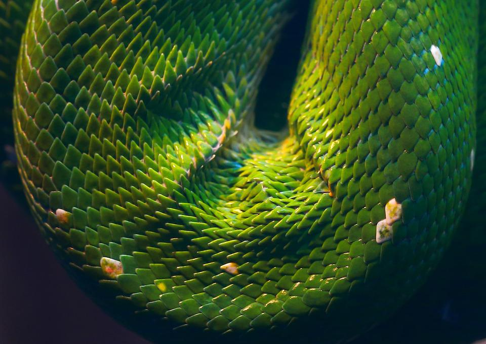 Snake, Reptile, Animal World, Nature, Animal, Exotic