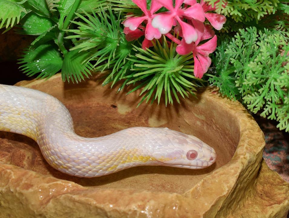 Snake, Snakehead, Scale, Terrarium, Creature, Reptile