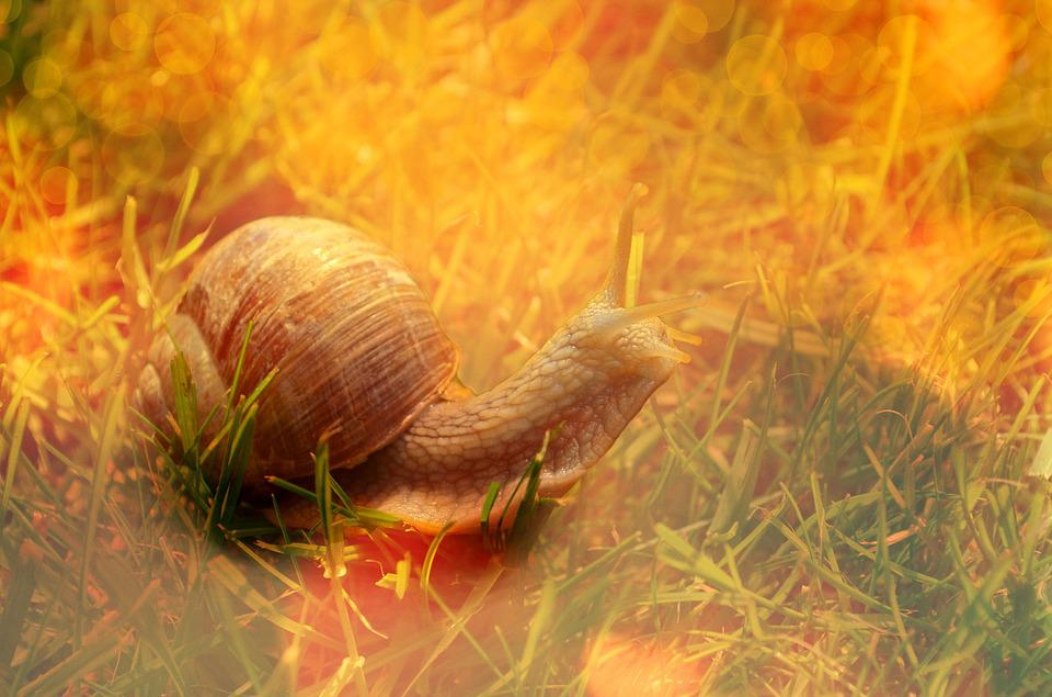 Snail, Shell, Animal, Reptile, Light, Lighting