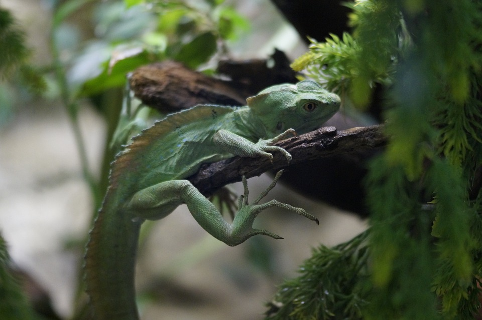 Lizard, Reptile, Green, Camouflage, Disguised