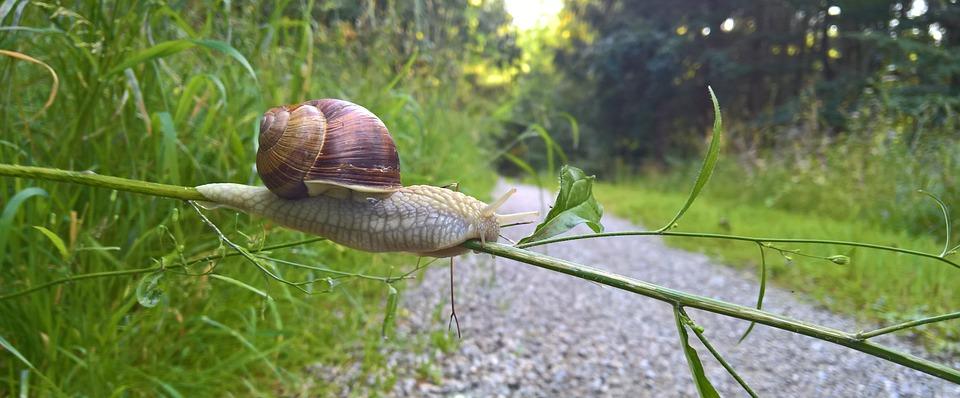 Snail, Shell, Escargots, Snail Shell, Reptile, Mollusk