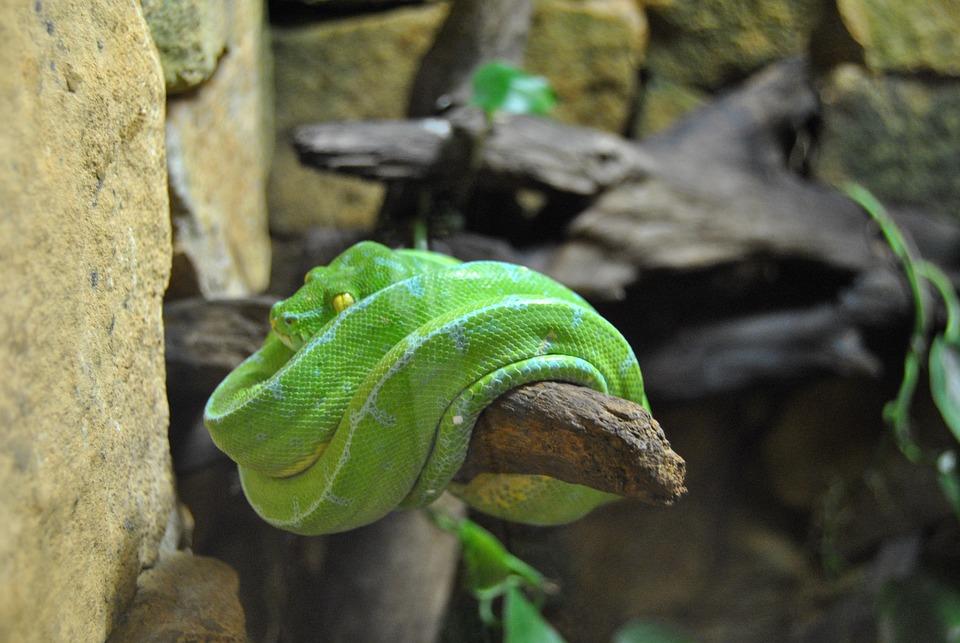 Snake, Alligator Bay, Reptile