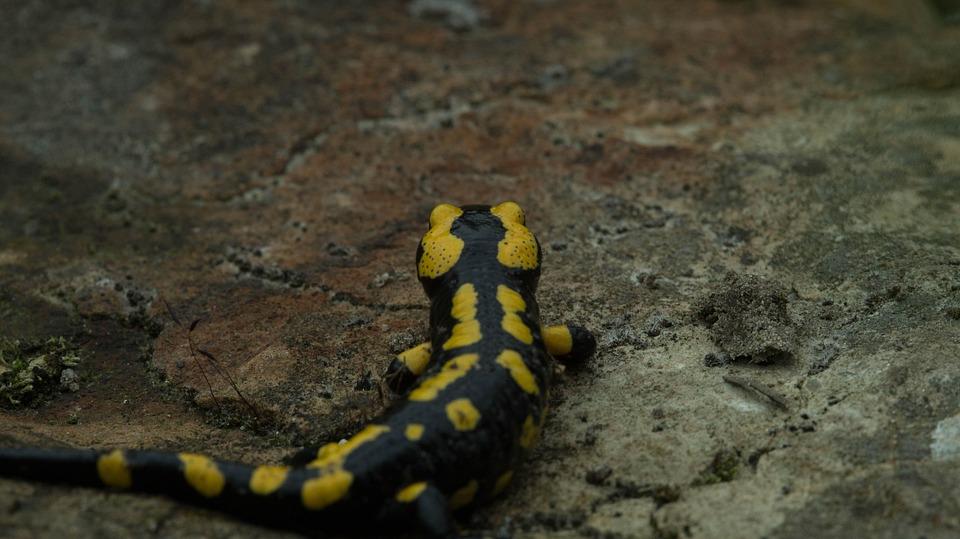 Animal World, Nature, Animal, Snake, Reptile