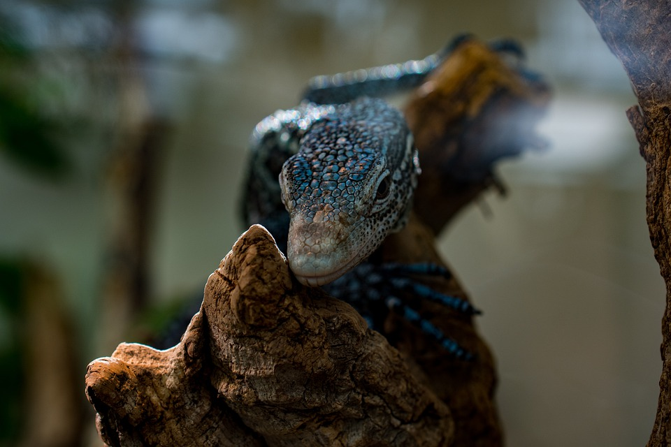 Lizard, Zoo, Reptile, Scale, Dragon, Animal, Terrarium