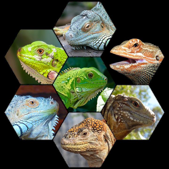 Reptiles, Carnivores, Wild, Lizard, Animal, Predator