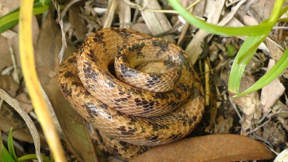 Snake, Reptiles