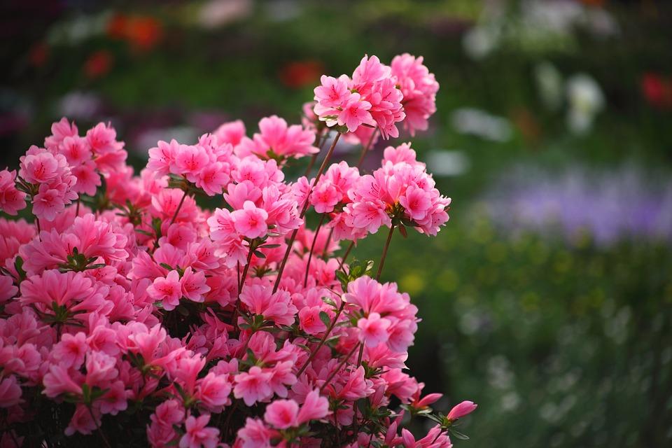 Flowers, Plants, Flower Market, Republic Of Korea