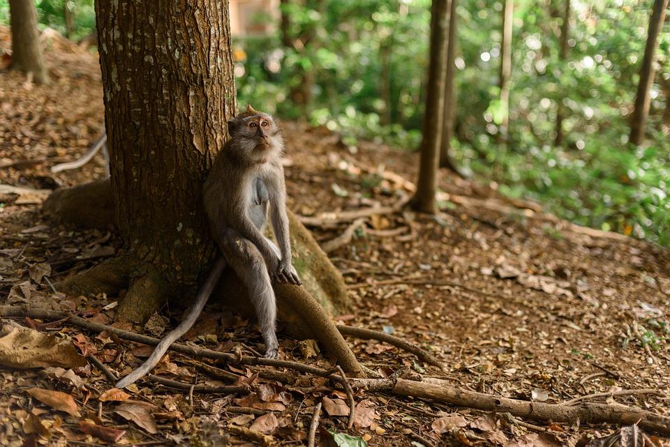 Monkey, Tree, Park, Indonesia, Bali, Reserve, Wild