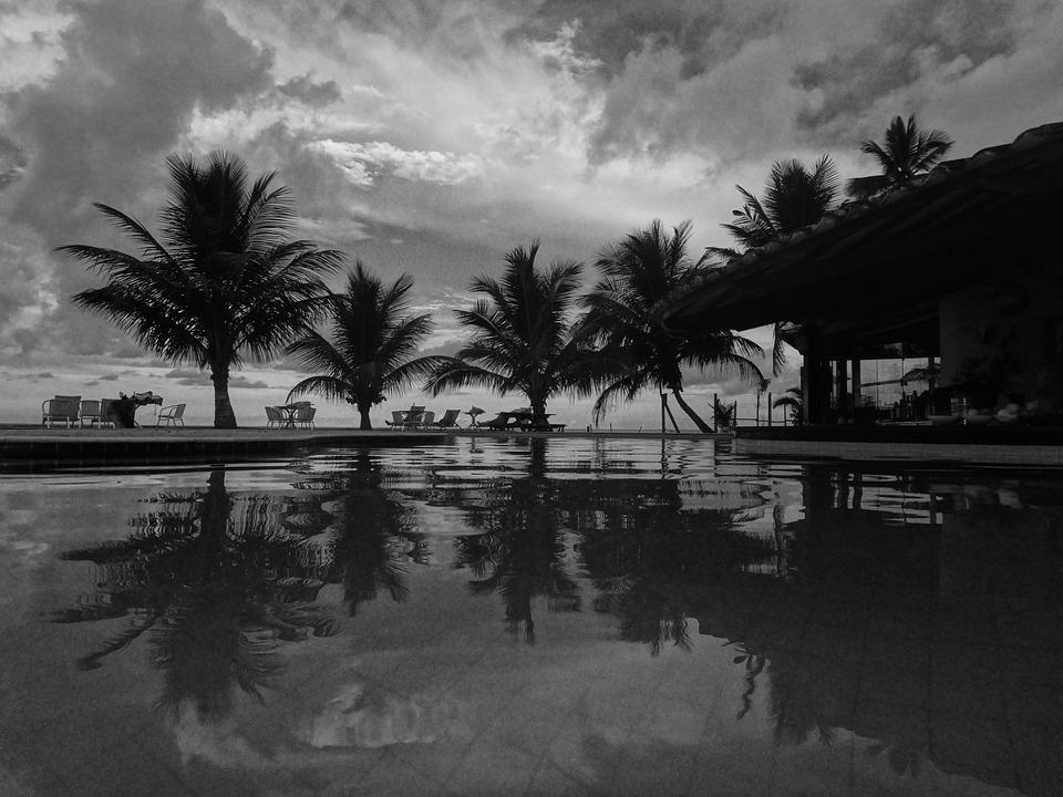 Coconut Tree, Holiday, Vocation, Resort, Coconuts