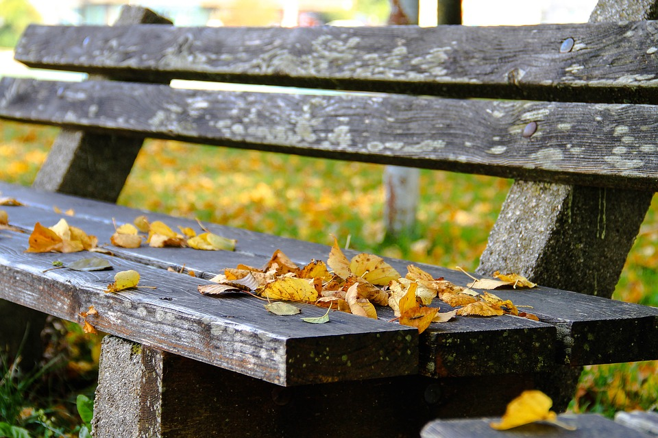 Autumn, Bank, Leaves, Nature, Fall Leaves, Rest