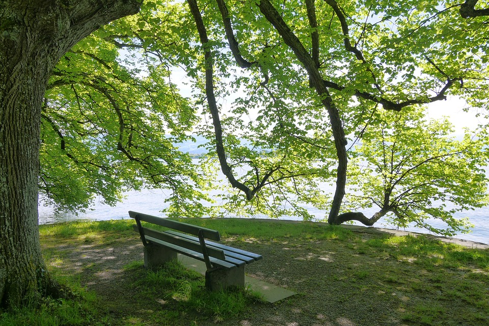 Lake Constance, Bench, Rest, Tree, Mood
