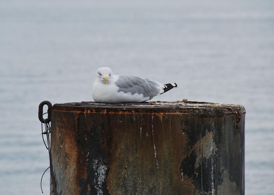 Animal, Bird, Seevogel, Gull, Rest, Sit