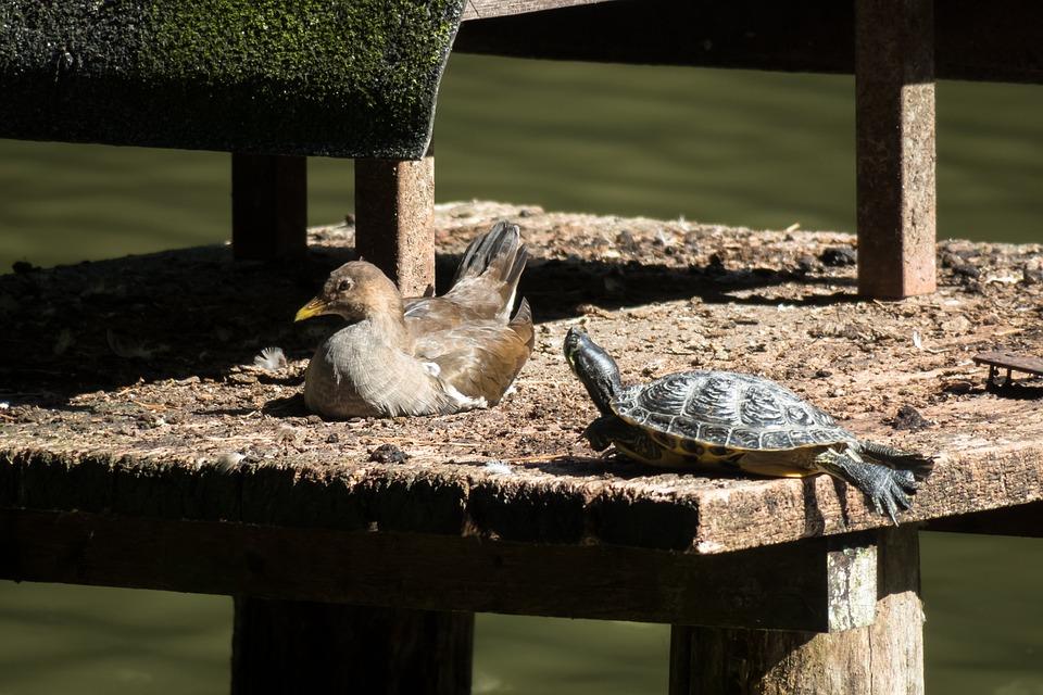 Bird, Water Turtle, Turtle, Concerns, Rest, Silent