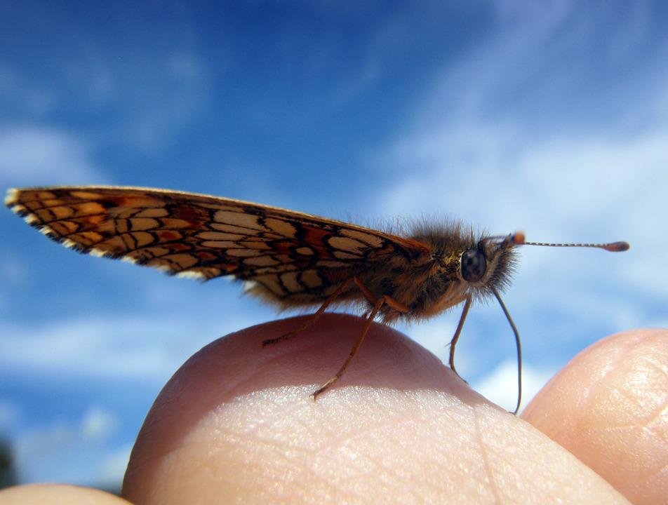 Butterfly, Small, Hand, Break, Rest, Sky, Close, Macro