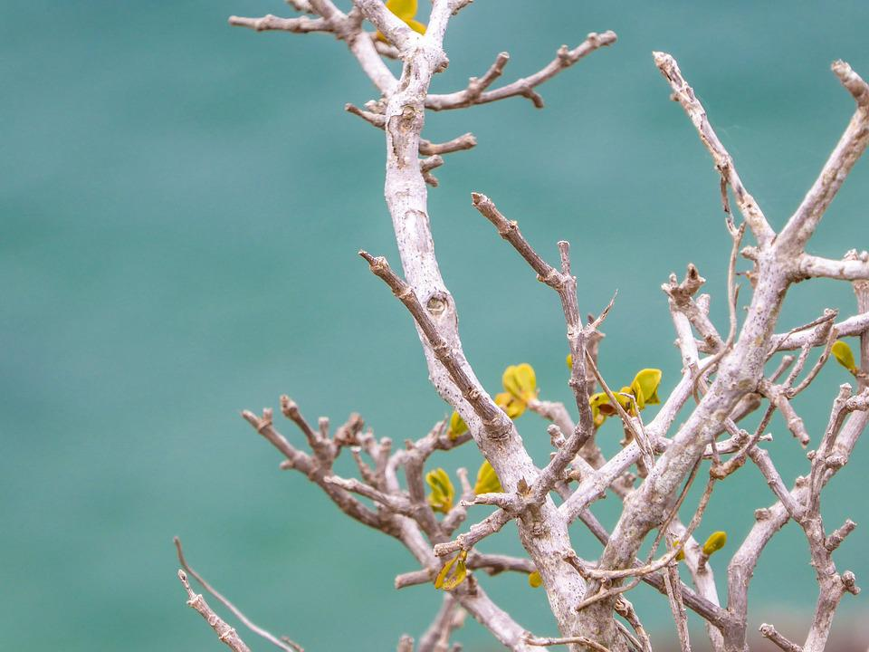 Branch, Engine, Sea, Turquoise, Rest, Macro, Close