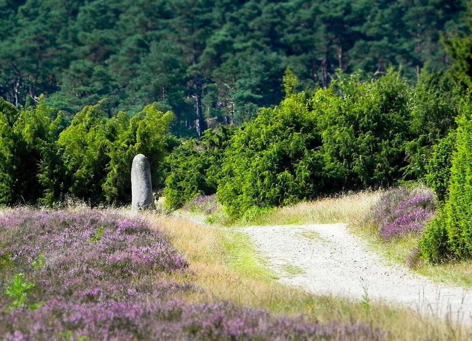 Heide, Hike, Walk, Hiking, Away, Landscape, Rest