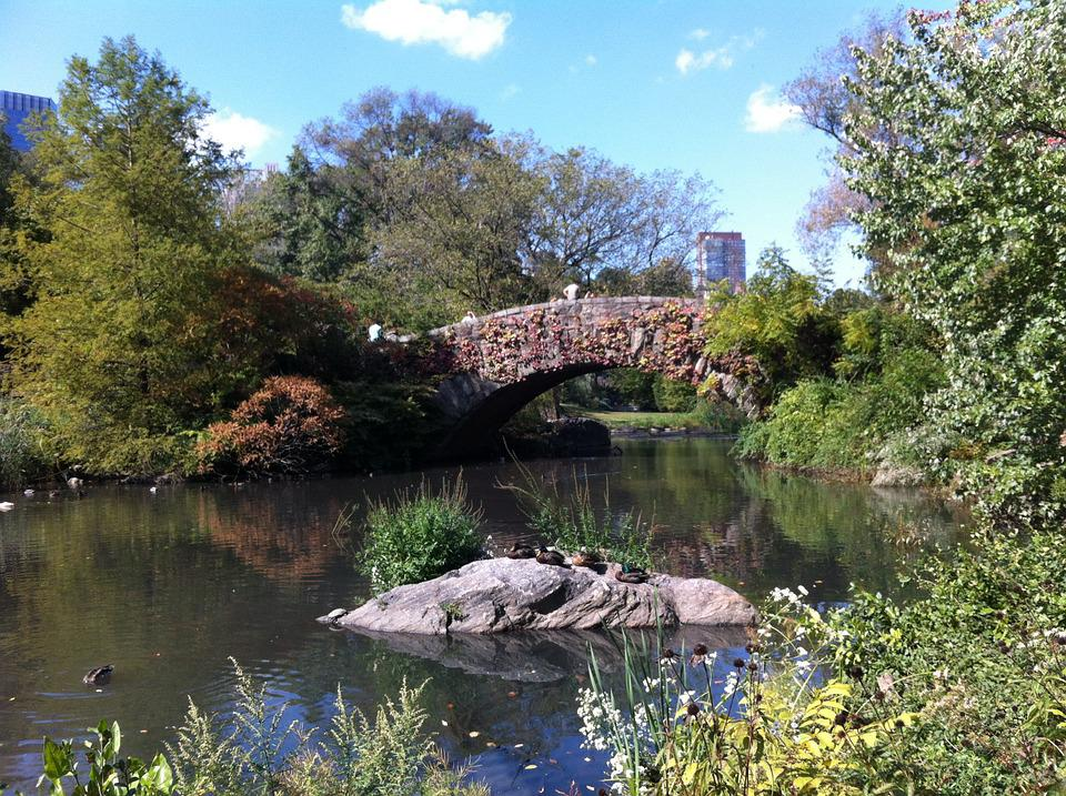 Central Park, New York, Bridge, Water, Nature, Rest
