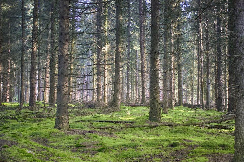 Landscapes, Pinewood, Winter, Rest, Mindfulness