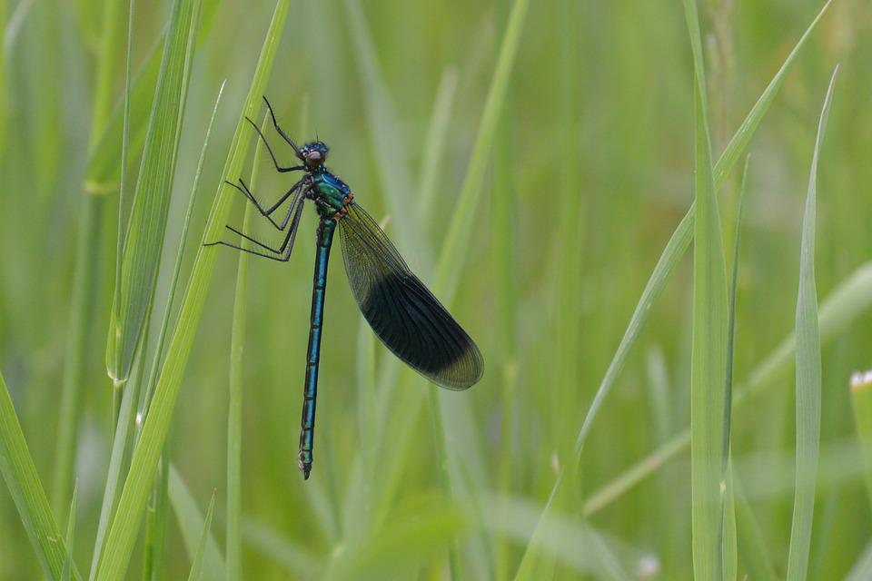Dragonfly, Herb, Green, Pausing, Pause, Rest, Resting