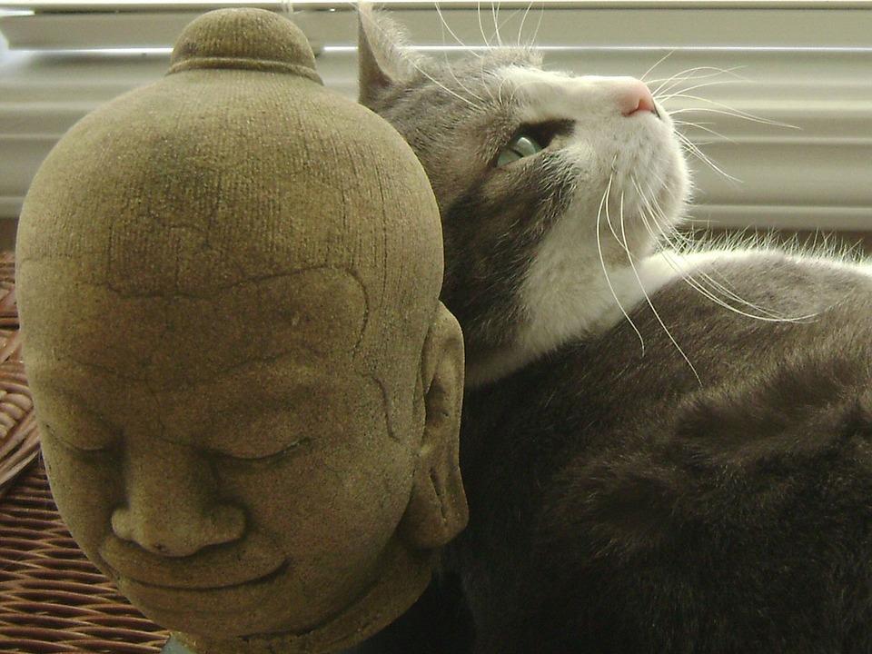 Cat, Still, Life, Domestic, Feline, Resting, Dreaming
