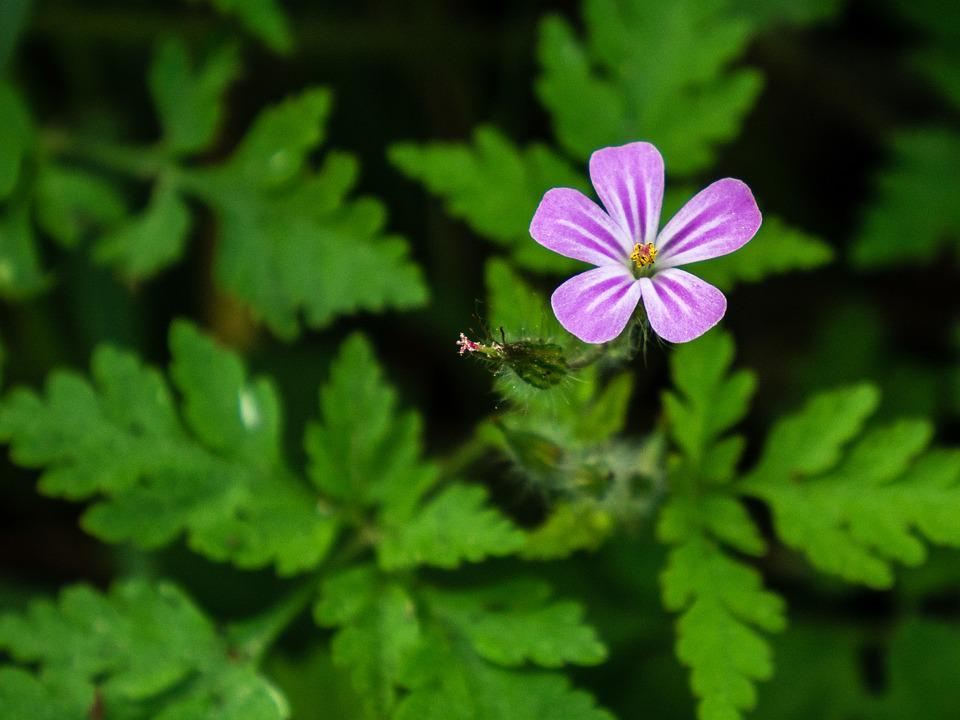 Retail, Flower, Plant, Nature, Pink, Bud, Green