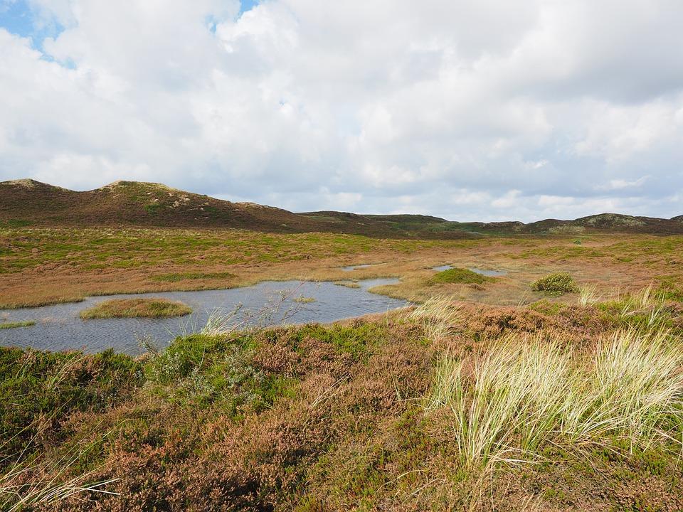 Sylt, Heathland, Dunes, Retama, Peat Bog, Heather
