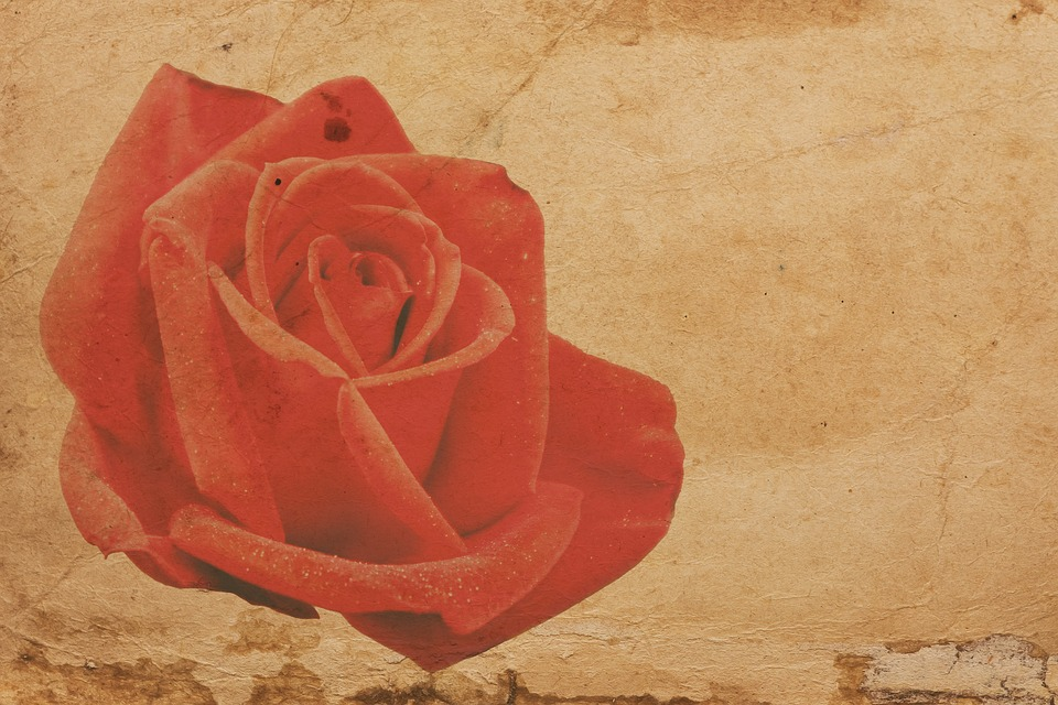 Rose, Red, Paper, Old, Vintage, Red Rose, Shabby, Retro