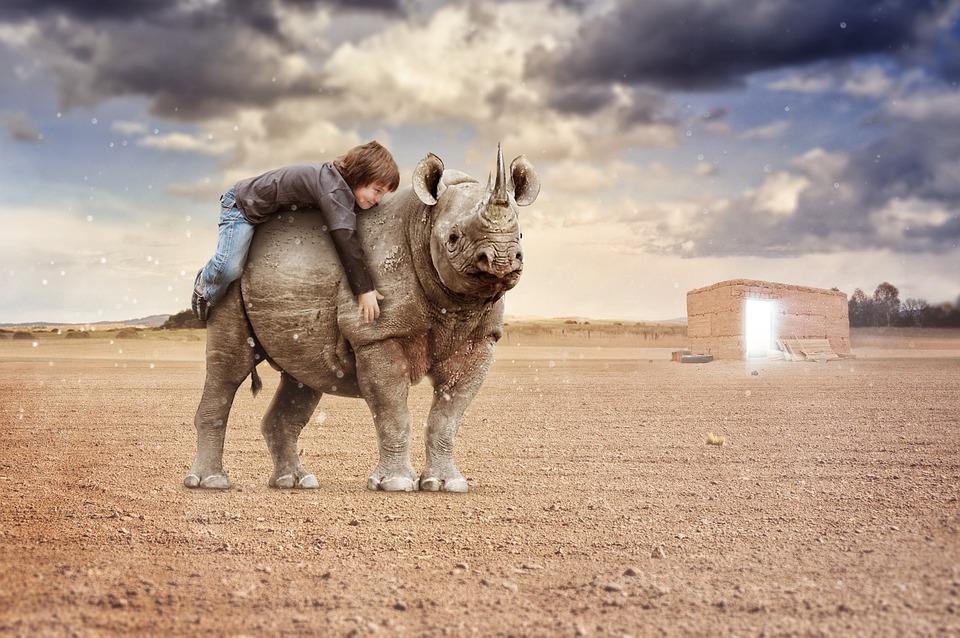 Rhino, Nature, Desert, Holiday, Waves, Mountains
