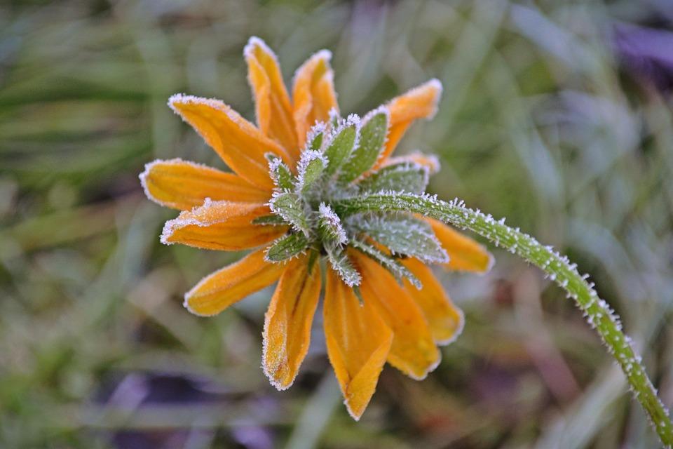 Flowers, Sunflowers, Rhyme, Yellow, Autumn, Nature
